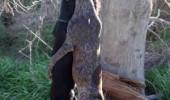 hanged dogs romania
