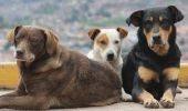 Blocarea legii lasă câinii comunitari pe stradă în Hunedoara