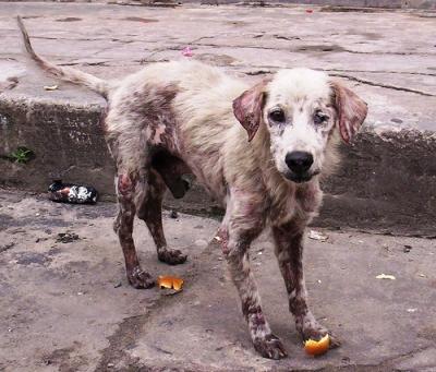 """Psihologul spune: """"Cei care chinuie animalele fac, în general, același lucru și cu oamenii"""""""