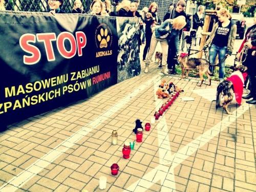 POLONIA. Sute de polonezi au protestat impotriva deciziei de a se omori maidanezii romani.