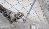 """Dezvăluiri ȘOCANTE! """"Cine este în spatele afacerii adăpostului de câini din Ovidiu?"""" VIDEO"""