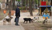 Numărul câinilor adoptaţi în Capitală, în creştere după lansarea ofertei de hrană gratuită