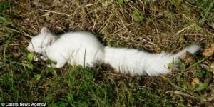 IATĂ ce animal BIZAR a descoperit un pădurar din Marea Britanie