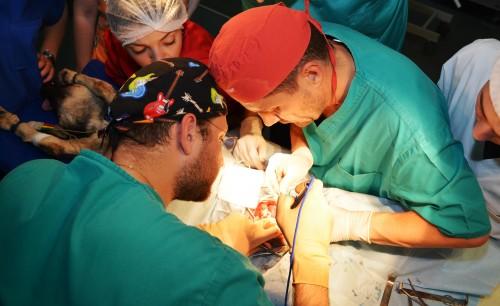 """Premieră în România! Un medic """"de animale"""" şi unul """"de oameni"""" au salvat viaţa unui câine aseară printr-o operaţie deosebită"""