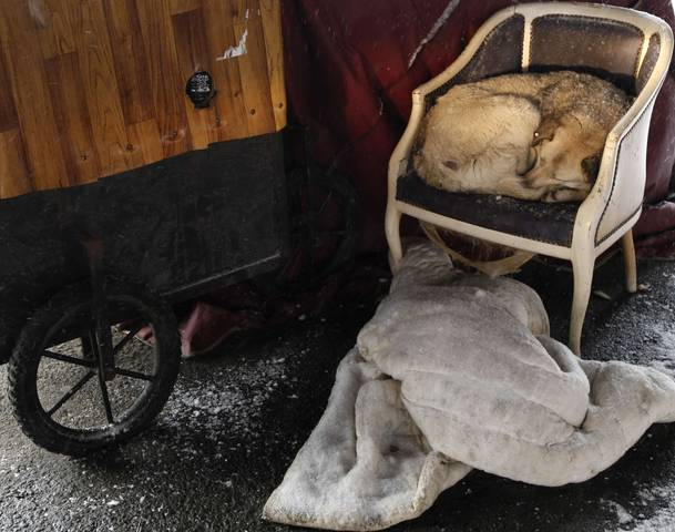 A stray dog rests on a chair on a cold winter day in Istanbul