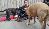 Cum împarți o bucată de pâine la un om și doi câini
