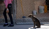 A stray dog sits on a sidewalk in Ciudad Juarez, Mexico