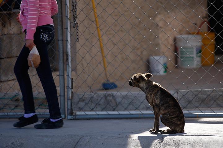 A stray dog sits on a sidewalk in Ciudad Juarez, Mexico