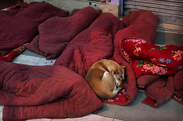 A stray dog sleeps with labourers on a pavement in New Delhi