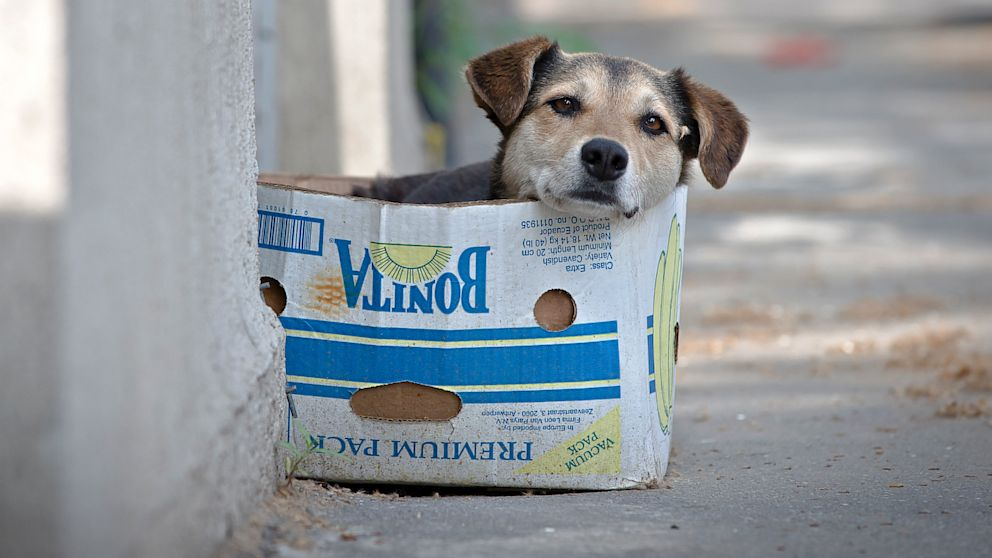 AP_romanian_stray_dogs_jef_130913_16x9_992