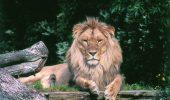 Animale alungate de la Grădina Zoologică din Râmnicu Vâlcea, pentru că sunt prea urâte