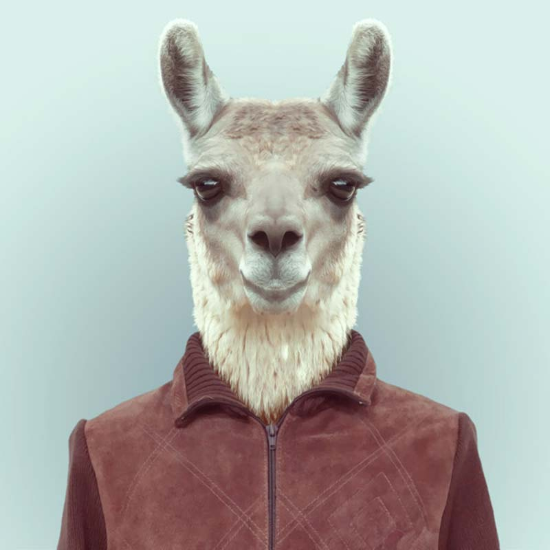 Animals-Dressed-Like-Humans-7