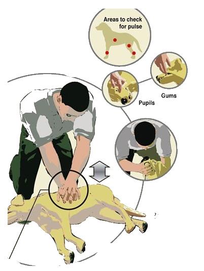 CPRbun