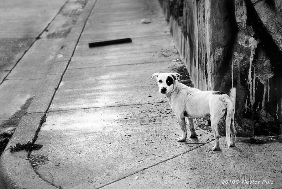 Corner-Model-Dog