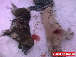 România, campioana actelor de cruzime îndreptate împotriva animalelor