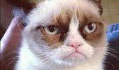 Grumpy Cat, prima felina cu statuie la Madame Tussauds