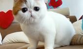 Snoopy-Cat-s1