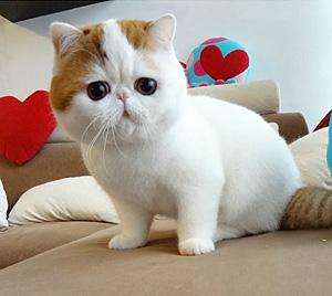 Snoopy, pisica la modă pe internet