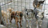 Un om al primarului decide când se eutanasiează un câine. VEZI ordinea în care vor fi prinsi maidanezii!
