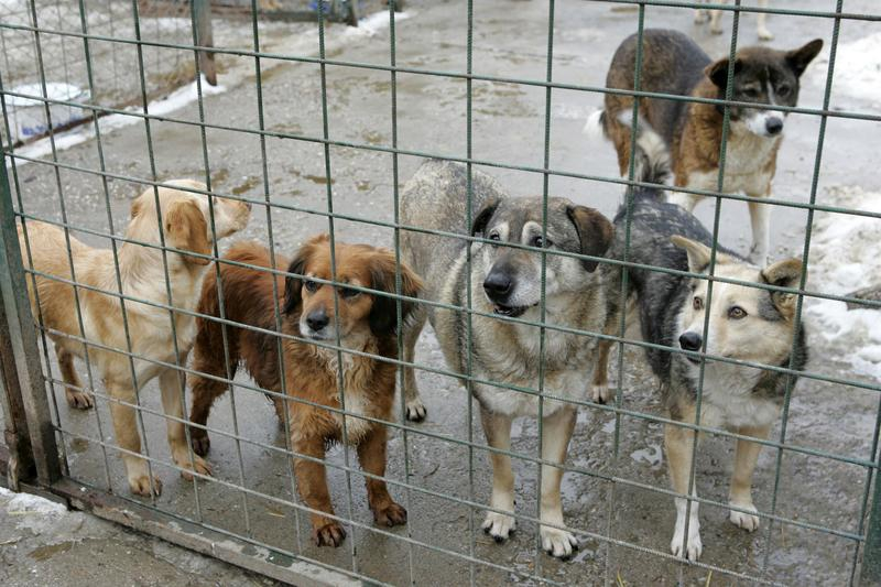 PICĂTURA de NOROC a câinilor din Constanța! Uite ce nu mai au voie să facă SRL-urile!