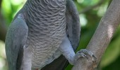 african-grey-parrot-talk-to-animals