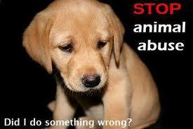 Unii dintre noi pur şi simplu nu au suflet! Uite câte cazuri de cruzime împotriva animalelor au fost înregistrate la Poliţie