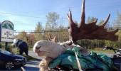 animal4_01_bf67180646
