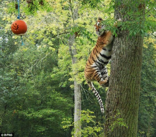 Da, da! Lasa ca vedeti voi! Putetai sa ma intrebati inainte daca portocaliul se asorteaza cu verdele copacului, dar voi NU si NU!