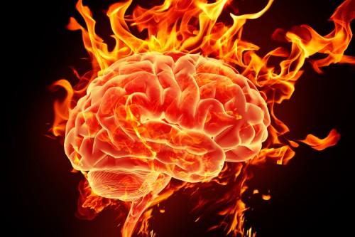 Are creierul de 7.000 de ori mai mic ca al tau, dar combina informatii complexe!