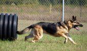 Cainii nostri de la Interventii Speciale merg sa-i antreneze pe cainii din Moldova