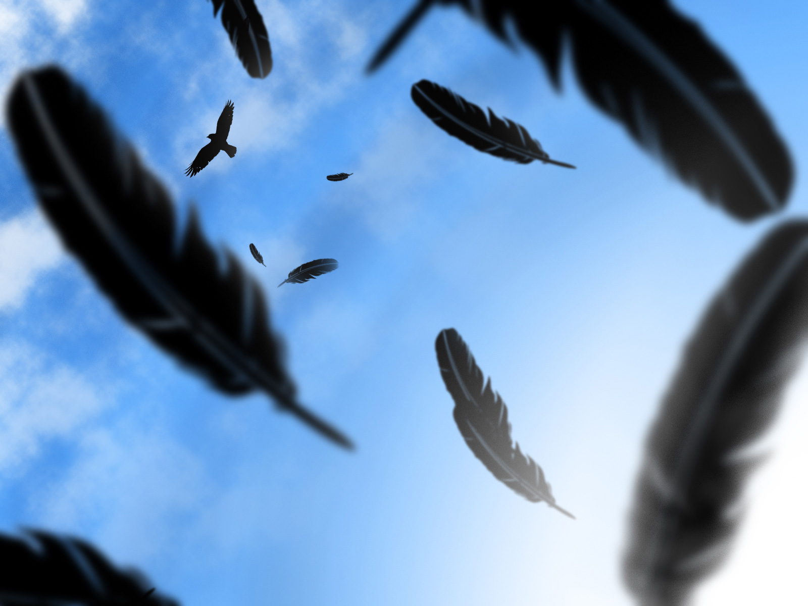 crow cioara