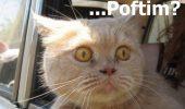 Wooow! Haina il face pe om? Dar pe ANIMAL?? Imagini dementiale cu animale la poza de buletin :)