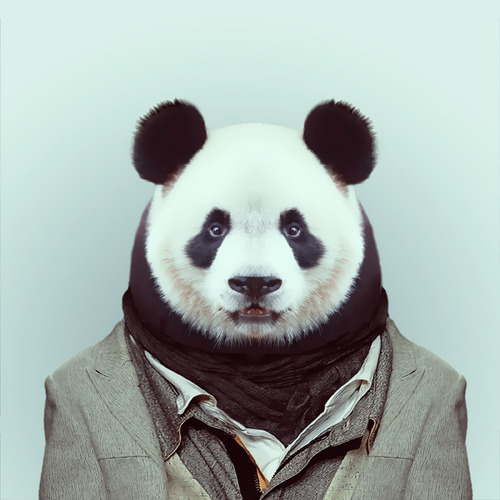 dierenportretcool15