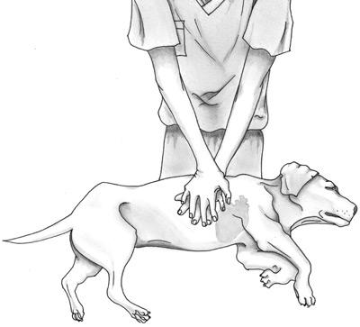 Salveaza-ti animalul de companie cu metoda CPR!