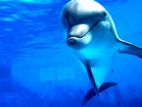 dolphin-talking-thelepaty