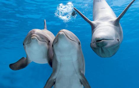dolphinmain-ngk0607_14569_470x300