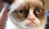 Grumpy Cat a ajuns la METEO! O sa mori de ras!