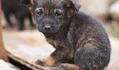ASPA cere sute de euro pe cap de caine pentru eutanasiere, dar ea costa de fapt doar 60 de lei!