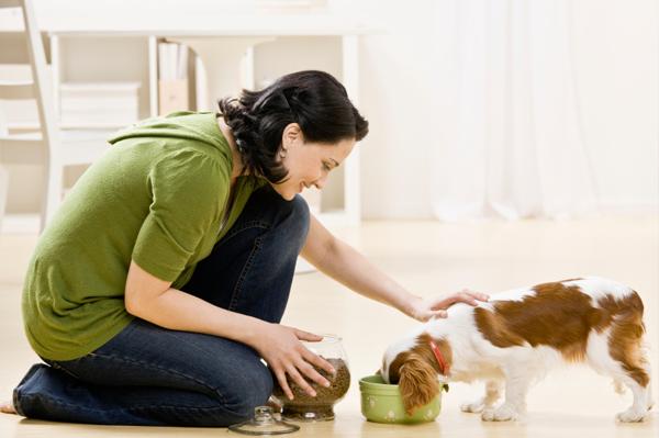 Cât cheltuiesc românii pe lună pentru hrana câinilor de companie
