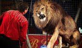 BOMBĂ!!! Din 2015 animalele salbatice sunt INTERZISE in spectacolele CIRC!