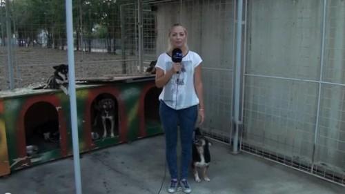 O jurnalistă a trăit un moment PENIBIL într-un adăpost pentru câini. VIDEO