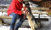 Neglijența, principala cauză a cruzimii asupra animalelor