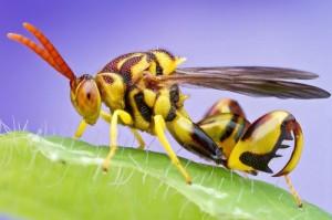 Fantastica lume a insectelor. Iată cât de colorate sunt muștele, omizile sau gandacii