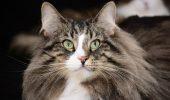 Dacă iubești pisicile, Animal Zoo te invită la Hallowinner! Cele mai spectaculoase pisici te asteapta aici :) !