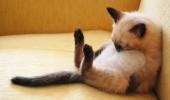 pisica doarme