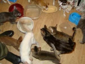 HORROR în Polonia. În casa unei femei au fost găsite peste 100 de pisici moarte!