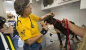 Campania de microcipare a câinilor a fost prelungită până la finele lui 2015