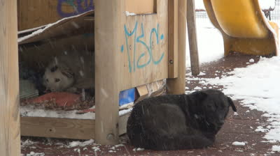 stock-footage-stray-dogs-abandoned-homeless-dogs-in-winter