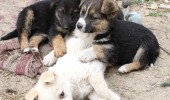 street_dogs_by_malaladanila-d3cy67t