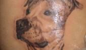 tatuaje caini (2)